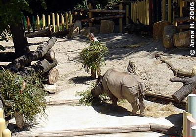Sundari, 27. Mai 2006