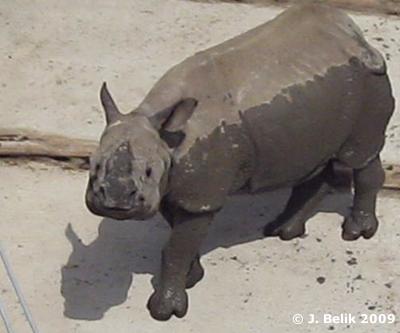 Sundari nach der Schlammpackung, 25. Juni 2009