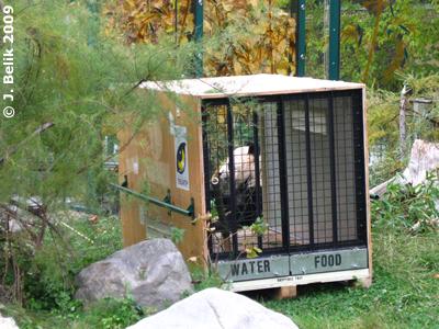 Fu Longs Transportkiste, dahinter Mama Yang Yang, 30. Oktober 2009