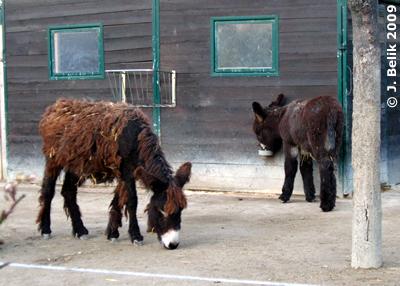 Amelie (re) und Halbschwester aus 2008, 26. Dezember 2009