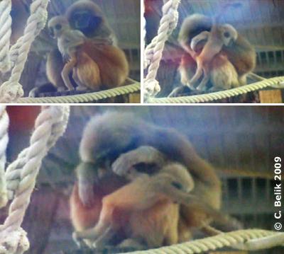 Zwergerl E.T. (11 Wochen alt) mit Mama Sipura, 11. Dezember 2009