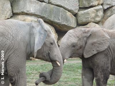 Die beiden Kiddies Mongu (li) und Kibo (re), 7. Dezember 2009