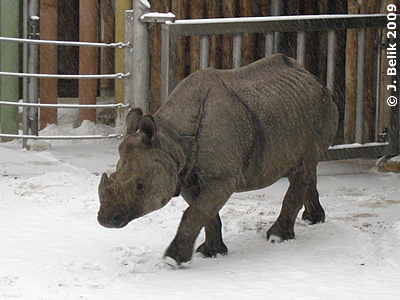 Jange, 19. Dezember 2009