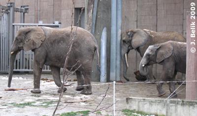 Numbi, Drumbo und Kibo, 23. Dezember 2009