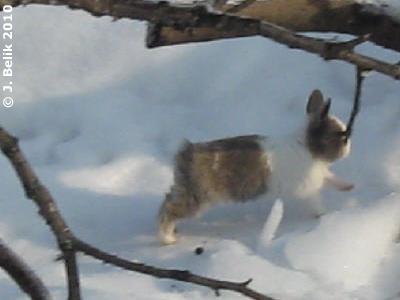 Hoppelchen düst herum, 12. Jänner 2010