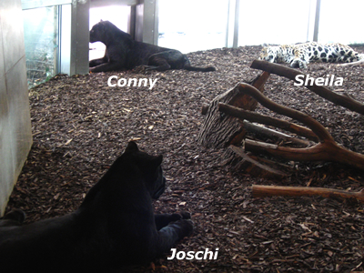 Joschi, Sheila und Conny, 29. Jänner 2010