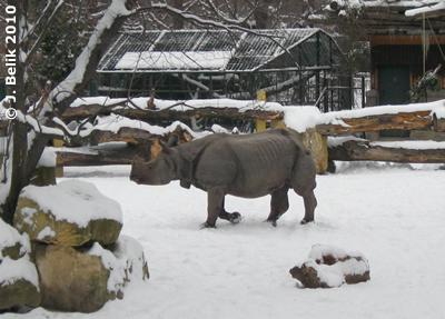 Jange im Schnee, 6. Jänner 2010