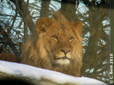 Kijoqo, 29. Jänner 2010