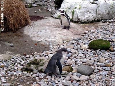 Pinguine, 2. Jänner 2010