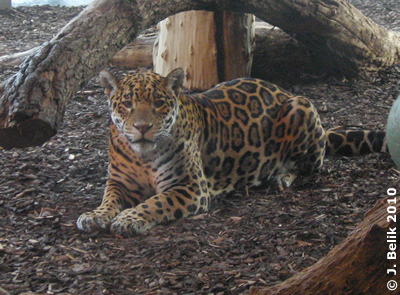 Sheila, die neugierige Katze, 29. Jänner 2010