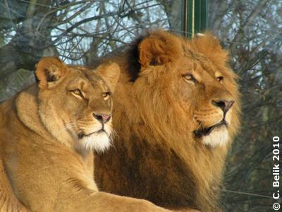 Somali und Owambo, 29. Jänner 2010