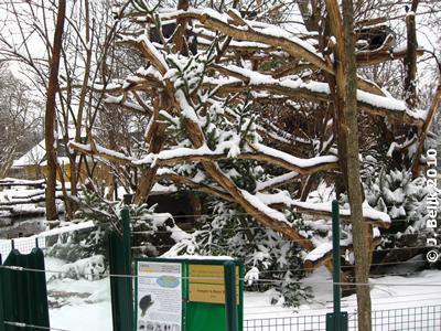 Wie ein verzauberter Winterwald - Urson-Anlage am 6. Jänner 2010