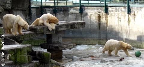 Bruderherz, was machst Du dort unten? 23. Februar 2010