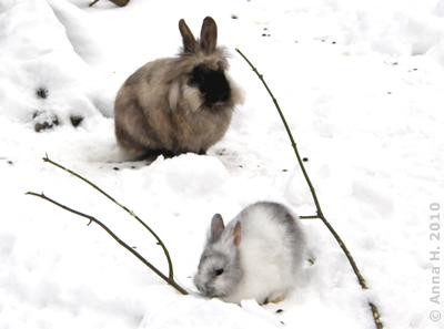 Ausreißerkaininchen und das Kaninchen-Baby, 13. Februar 2010