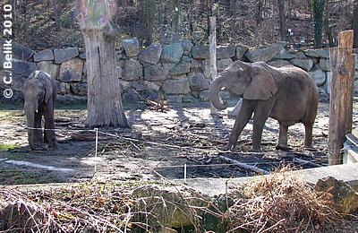 Kibo (li) mit Mama Numbi (re), 27. Februar 2010
