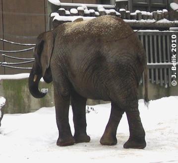 Mongu, 12. Februar 2010