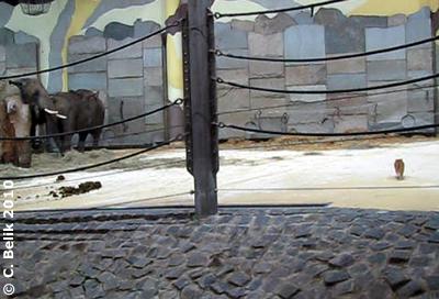Ich bleib lieber im Haus, das ist es angenehmer! Rosi im Elefantenhaus, 11. Februar 2010