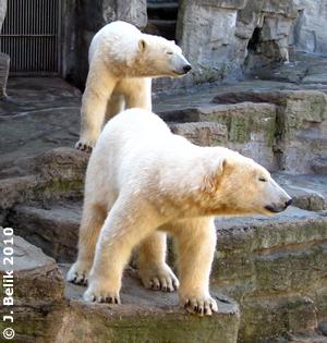 Arktos und Nanuq, 18. März 2010