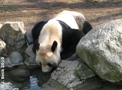 Long Hui, 5. März 2010
