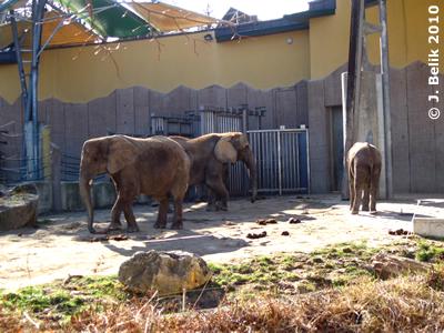 Numbi (li), Drumbo (mitte) und Kibo (re), 3. März 2010