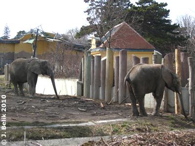 Numbi (li) und Kibo (re), 19. März 2010