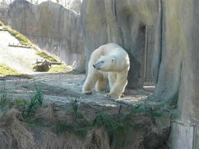 Olinka in Rotterdam, 9. März 2010 (Foto: Diergaarde Blijdorp / Zoo Rotterdam)