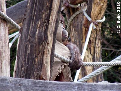 Sol auf dem Klettergerüst, 3. März 2010