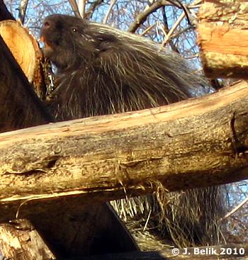 Ursi, 18. März 2010