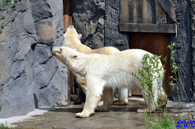 Arktos und Nanuq, 23. Mai 2010