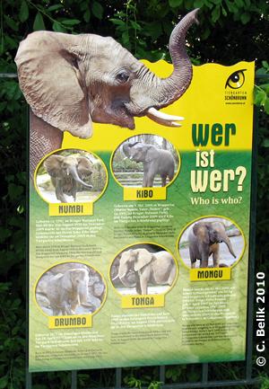 Neue Info-Tafel bei den Elefanten