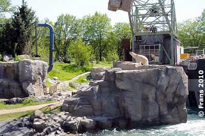 Bei der (kommentierten) Fütterung werden Fische vom Kran geworfen, Srpinter steht auf dem Felsen oben, 3. Juni 2010