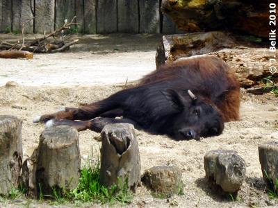 Günni schläft mit offenen AUgen, 22. Juni 2010