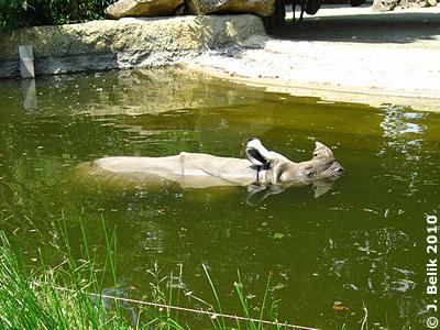 Jange genießt das kühle Naß, 8.Juni 2010