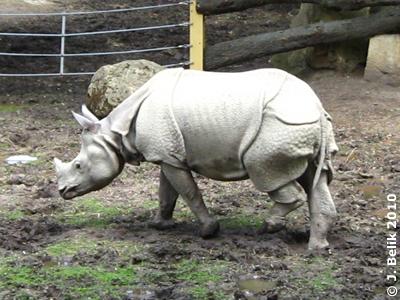 """Die """"weiße"""" Sundari, 15. Juni 2010"""