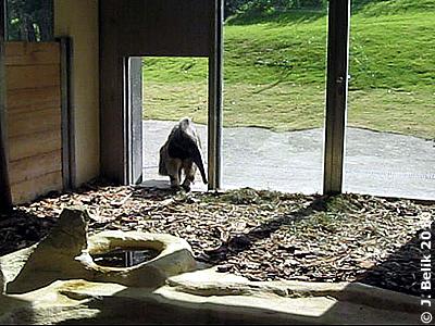 Sogar Emilia wagt schon einen Blick in das Reich der Tapirbuben, 28. Juli 2010