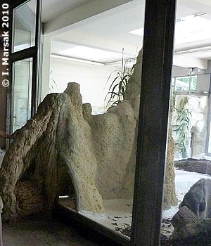 Künstlicher Termitenhügel im Südamerika-Haus, 10. Juni 2010