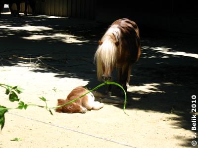 Müdes Zwergi mit Mama Pia, 10. Juli 2010