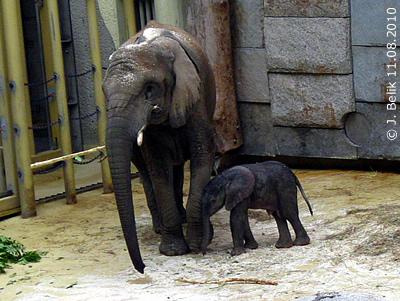 Numbi mit Baby, 11. August 2010