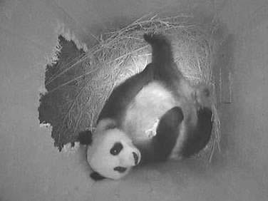 Yang Yang mit ihrem zweiten Baby, 23. August 2010