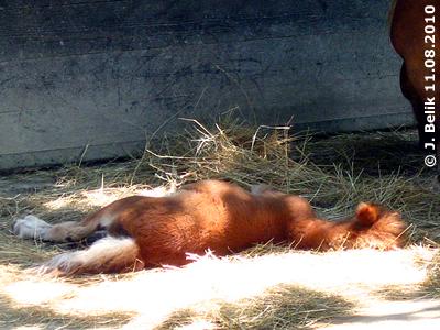 Sooo ein müdes Zwergi! Pias Baby, 11. August 2010