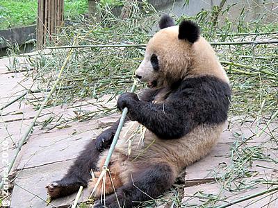 Fu Long in Bi Feng Xia, 30. Mai 2010