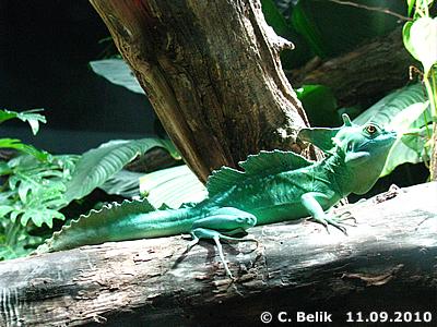 Und was ist das für ein schönes Tierchen? 11. September 2010