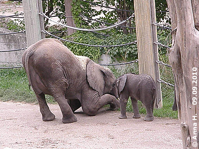 Kibo und sein kleines Brüderchen, 9. September 2010