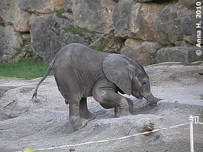 Mini-Eli beim Butteln, 4. September 2010