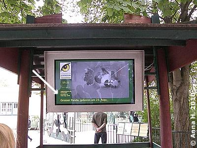 Monitor vor dem Pandahaus, das Datum der Aufnahme wird angezeigt (Pfeil), 18. September 2010