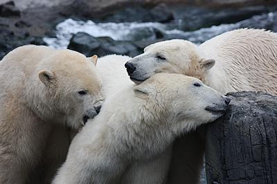 Arktos, Nanuq und Sprinter, 22. Oktober 2010
