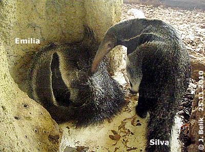 Silva: Steh endlich auf, Emilia, ich mag spielen! 25. November 2010