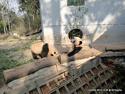 Fu Long (re) und Wu Jie (li), Bi Feng Xia, 28. Dezember 2010