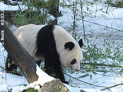 Yang Yang an der frischen Luft, 7. Dezember 2010