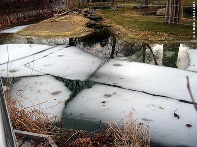 Trotz der milden Temperaturen waren noch nicht alle Eisplatten im Teich geschmolzen, 12. Jänner 2011
